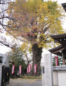 2011-4泉福寺(宮前区馬絹)