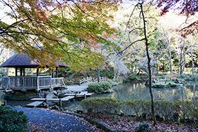 東高根森林公園(神木)