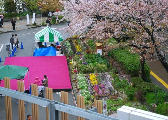 宮崎台桜祭り(宮前区)